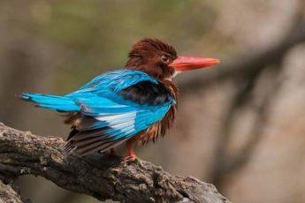bird watching in Rishikesh