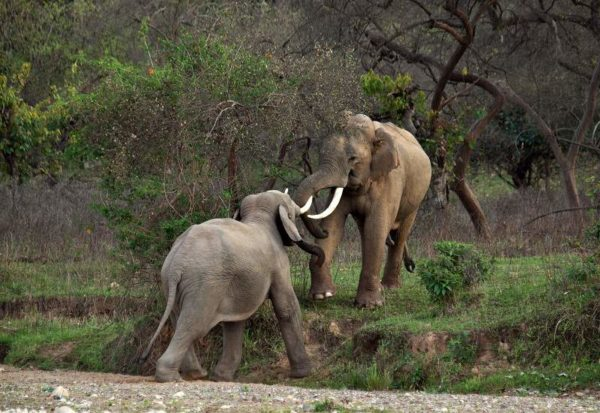Rajajji National Park