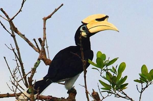Jhilmil Jheel A Lake Dance Of The Birds