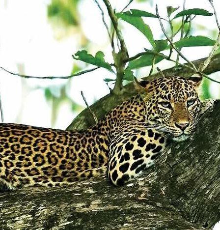 Binsar A Walk Through The Wildlife Sanctuary