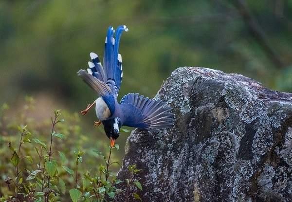 The Best Bird Watching Location in Uttarakhand