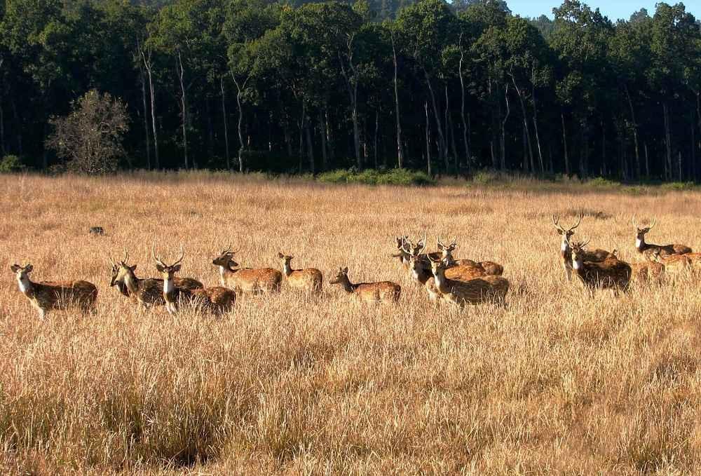 Rajaji National Park- Wildlife Tour