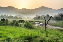 Rajaji National Park: the Kingdom of the Elephant
