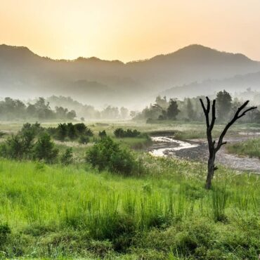 Rajaji National Park: the Kingdom of the Elephant