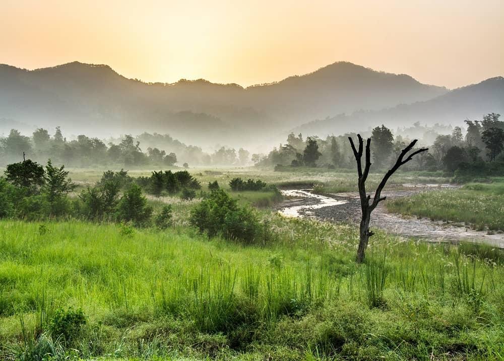 Rajaji National Park the Kingdom of the Elephant