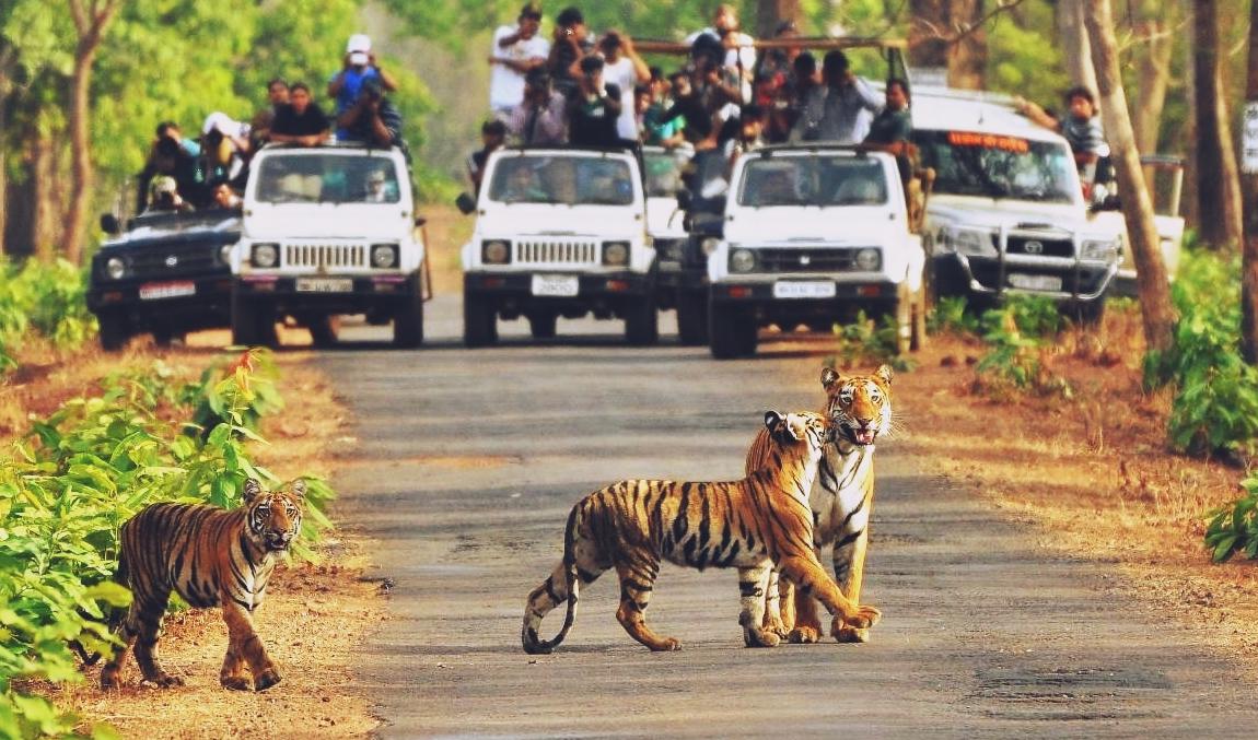 Tiger in Motichur Range of the Rajaji National Park
