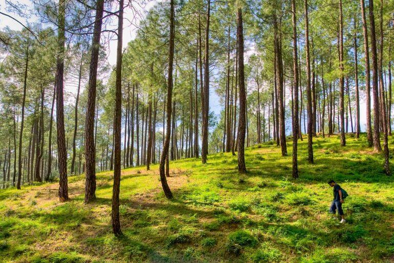 India's First Forest Healing Centre in Ranikhet, Uttarakhand