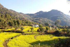 Barkot Village – A Birding Guide To Rishikesh's Himalayas